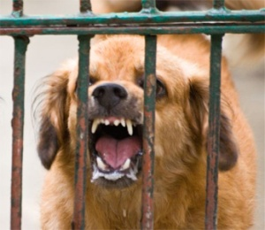 rabid-dog-1